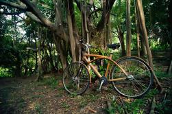 Bicicleta de descoberta de Banguecoque verde
