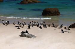 Excursión de medio día al Cabo de Buena Esperanza desde Ciudad del Cabo