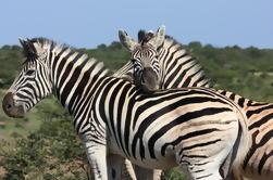 Hluhluwe Safari excursão de dia guiada de Durban