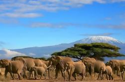 Excursión de un día al Parque Nacional Amboseli desde Nairobi