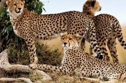 Finch Hattons y Mahali Mzuri Lujo Safari de 8 días desde Nairobi