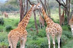 Museo nacional de Giraffe de Kenia y visita guiada del parque nacional de Nairobi