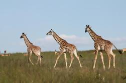 Excursión de medio día al Karen Blixen Museum and Giraffe Centre desde Nairobi