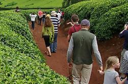 Excursión de un día a Kiambethu Tea Farm desde Nairobi