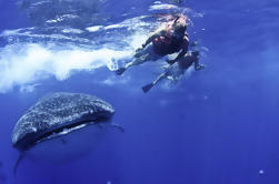 Nadar con tiburones ballena desde Playa del Carmen