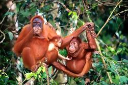 Bukit Merah Isla Orangután y Tour de la ciudad de Ipoh desde Kuala Lumpur