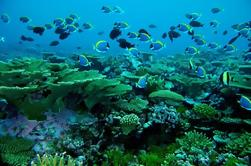 Maldivas Sol y Snorkel Incluye Transporte en Velero y Té de Maldivas Tradicional