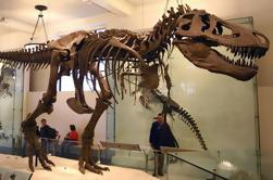 Tour Privado del Museo Americano de Historia Natural