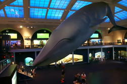 Visita en grupo pequeño del Museo Americano de Historia Natural