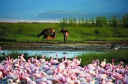 Excursão de um dia ao Parque Nacional do Lago Nakuru de Nairobi