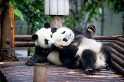 One-Day Chengdu Panda Private Tour Including Two Meals