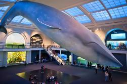 Passeio a pé do Museu Americano de História Natural