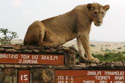 Parque Nacional de Nairobi, Giraffe Centre y Elephant Orphanage Day Tour de Nairobi