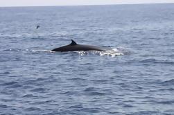 Crucero de ballenas y delfines de Tenerife a bordo del Barhyeli con Mar de Ons Los Cristianos