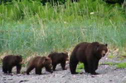 Juneau Shore Exkursion: Exklusiver Pack Creek Bear Viewing von Juneau