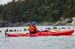 Juneau Shore Exkursion: Tongass Wildlife Kayaking Abenteuer