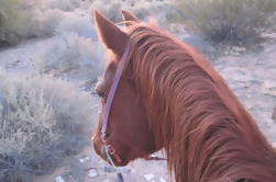 Paseo a caballo con el almuerzo