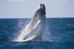 Observación de ballenas de medio día y crucero por el Canal de la Costa de Oro