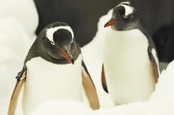 Penguin Passport en SEA LIFE Acuario de Melbourne