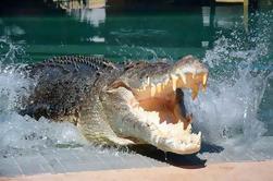 Crocosaurus Cove Darwin generali biglietti d'ingresso