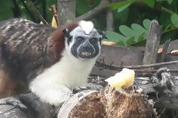 Parque Nacional Soberania y Isla Monkey