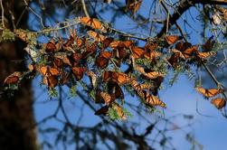 Monarch Butterfly Sanctuary Day Trip uit Mexico C