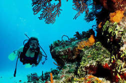 Cancun 2-Tank Reef of Wreck Dive