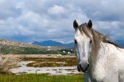 Excursión de un día a Connemara y Galway City desde Dublín