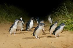Phillip Island Wildlife Tour Tarde Salida