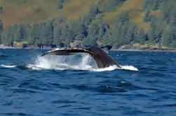 Juneau Shore Excursion: Whale-Watching Abenteuer