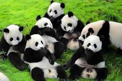 4-Night Soul de Xi'an y Chengdu Tour por el aire, incluyendo Panda Visita