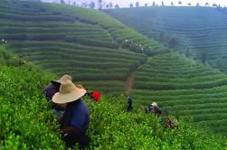 Experiencia de Chengdu: Té-Making Tour privado de la plantación de té Mengdingshan