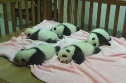2 días de viaje privado Xi'an combo paquete de guerreros de terracota y pandas gigantes de Chengdu