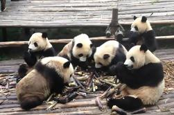 2-Day Chengdu Private Tour Combo Package of Giant Pandas and Xi'an Terracotta Warriors