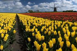 Excursão holandesa de moinhos de vento de Amsterdão