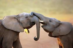 Excursión privada de 5 días a la ruta del jardín: Parque Nacional Tsitsikamma, Parque Nacional Addo Elephant, Bahía Jeffreys y Oudtshoorn
