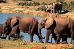 5 días de aventura en la ruta del jardín con Addo Safari Tour guiado desde Ciudad del Cabo