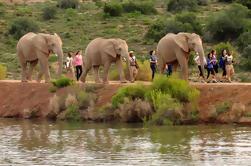 2 días de juego de la vida silvestre de África del Sur de Ciudad del Cabo