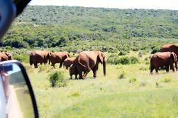 Excursión guiada de 8 días a Garden Route: Cape Point, Cape Winelands y Addo Safari desde Ciudad del Cabo