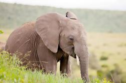 2 días de viaje en el parque de vida silvestre del Cabo Occidental y la ruta 62 desde Ciudad del Cabo