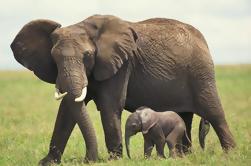Safari Cape Safari privado de 2 días desde Ciudad del Cabo