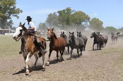Excursão de um dia pelo Gaucho de Buenos Aires: Don Silvano Ranch