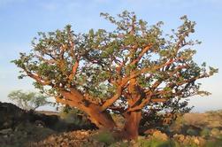Big Island Preserve Floresta Preserve Visita