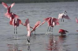 Excursión de un grupo pequeño: Excursión de un día de aventura a los Everglades desde el área de Greater Fort Myers / Naples