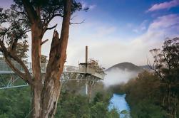 Excursión de un día a Tahune Airwalk y Hastings Caves National Park desde Hobart, incluyendo termales