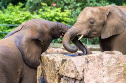 El Santuario del Orfanato de Elefantes y el Recorrido Aborigen de Kuala Lumpur