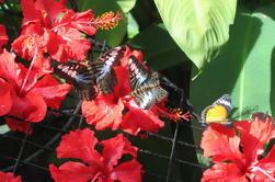 Excursión de medio día al Jardín Tropical de Especias y Entopia por Penang Butterfly Farm