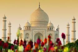 Viator Exclusive: Taj Mahal y la excursión de un día a Fort Agra