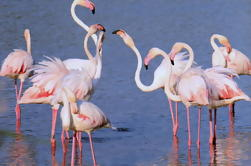 Camargue Tour from Aix-en-Provence
