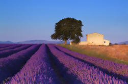 Provence Lavender Fields Tour from Aix-en-Provence